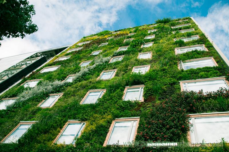 Los muros verdes de paisajismo urbano en m xico revista for Plantas para muros verdes verticales