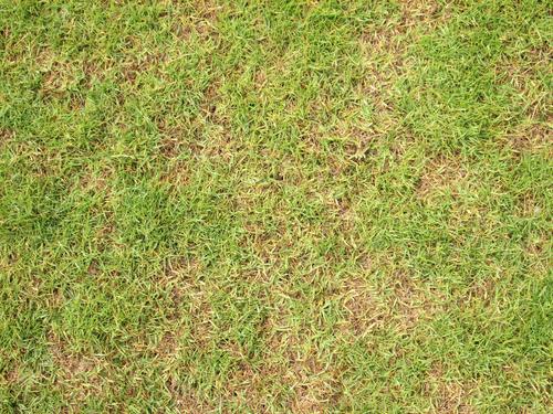 Los 8 consejos para cuidar el paso siempre verde lamudi for Como cuidar el pasto