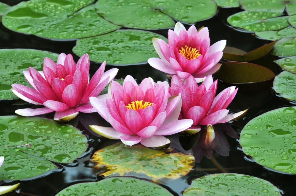5 consejos para tener un estanque en tu jard n revista for Nombre de estanque pequeno para tener peces