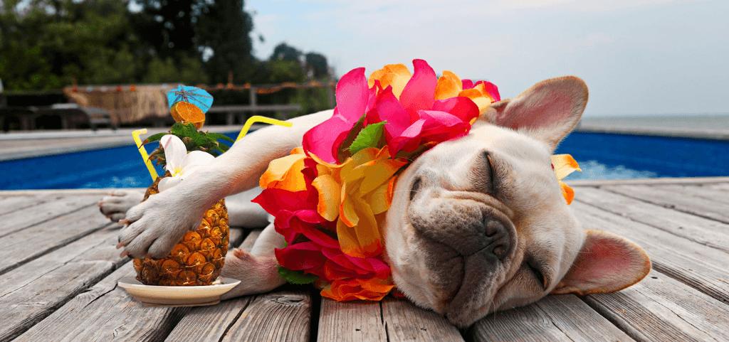 pet friendly vacaciones