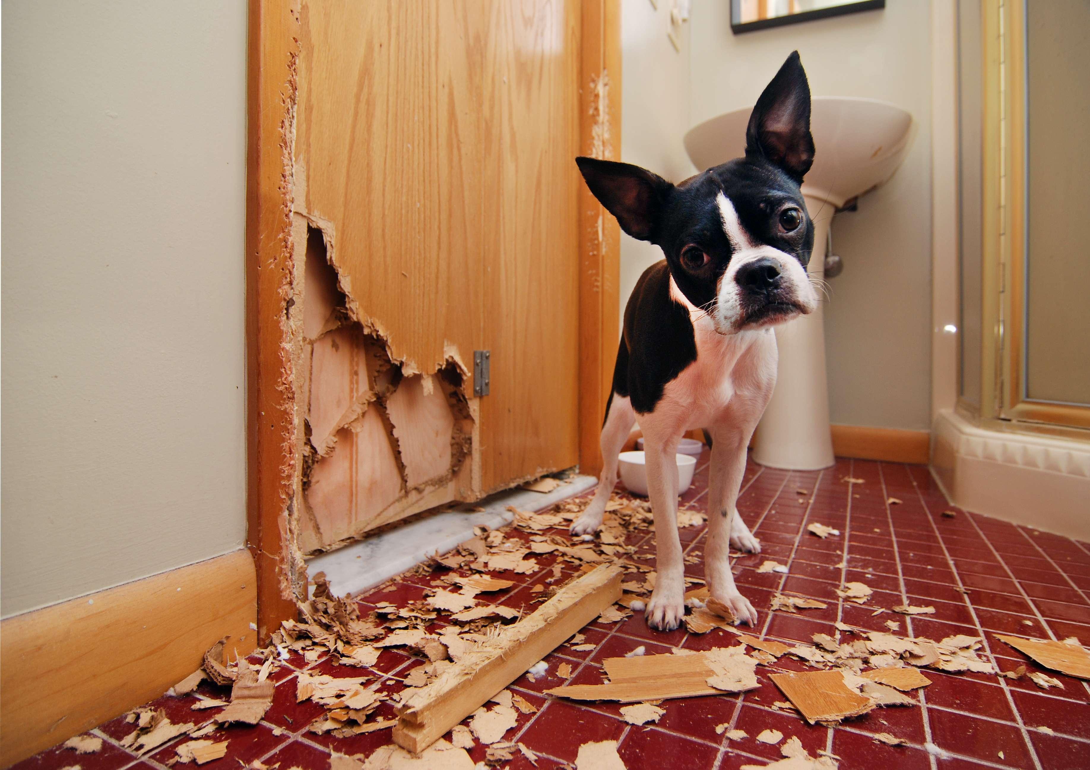 contrato de arrendamiento daños en propiedad