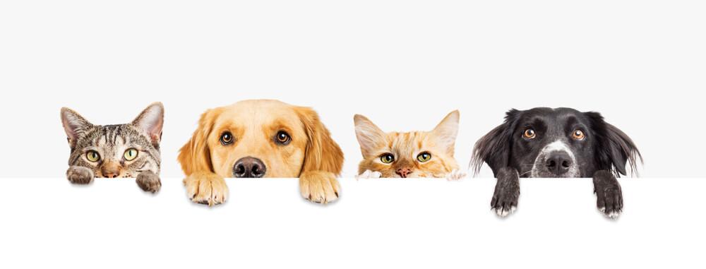 contrato de arrendamiento mascotas